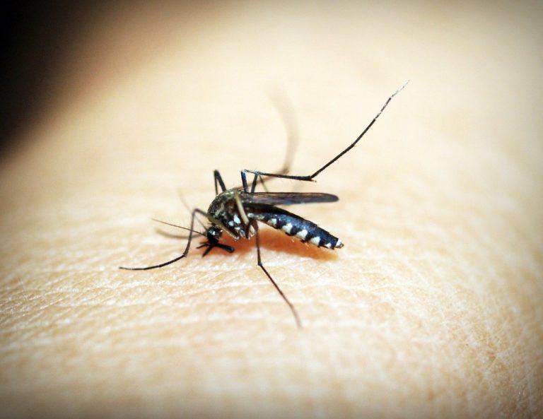 Dengue fever in hindi- डेंगू बुखार के कारण लक्षण और उपचार