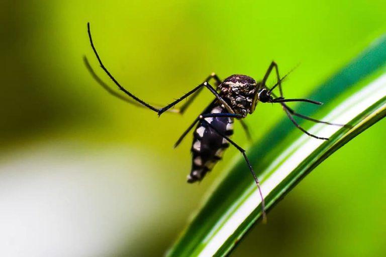 Malaria in Hindi – मलेरिया के लक्षण और बचाव
