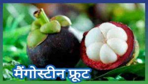 Mangosteen in Hindi मैंगोस्टीन फल के फायदे, खुराक और नुकसान